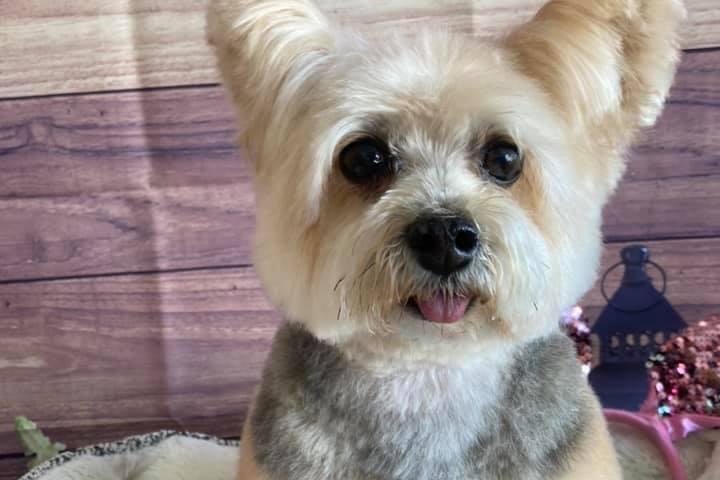 Pet Friendly Over The Top Pet Salon