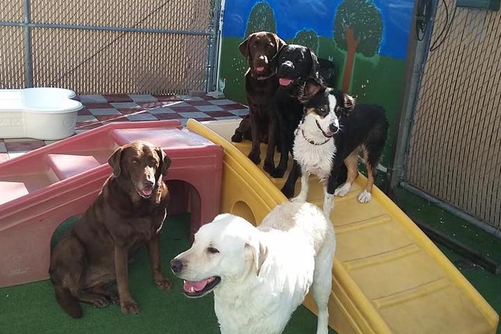 Pet Friendly Dogstown University