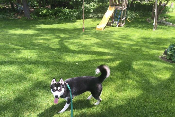 Pet Friendly DogWatch of the Twin Cities