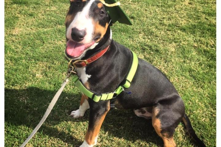 Pet Friendly Think Pawsitive - Pet Training