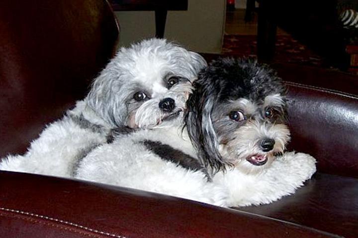 Pet Friendly Elite Pet Care