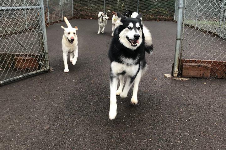 Pet Friendly Tail Wag-Inn Boarding Kennel