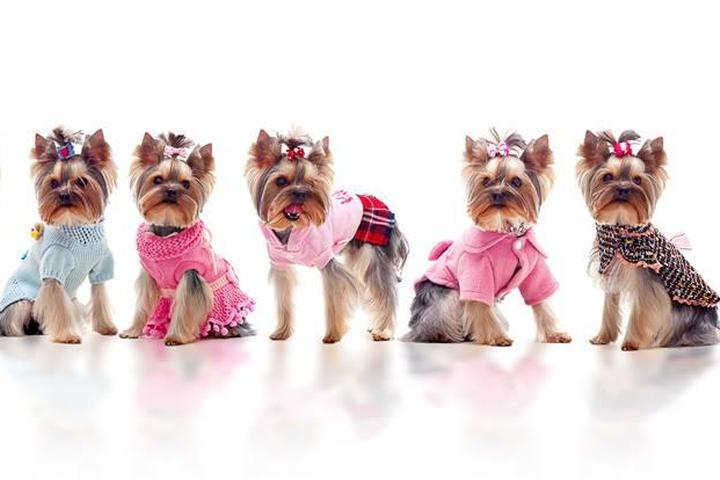 Pet Friendly The Real Housedogs of Bucks County