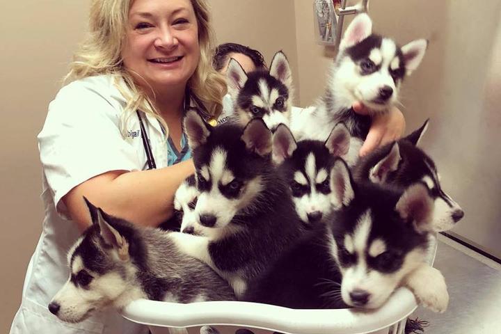 Pet Friendly Middlehope Veterinary Hospital