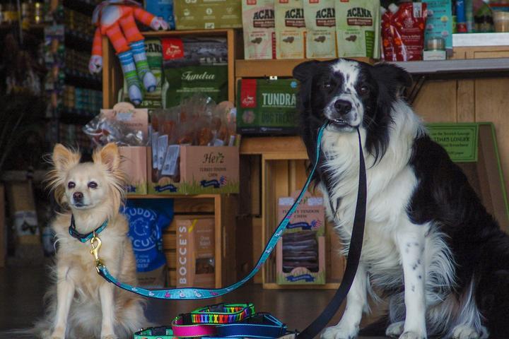 Pet Friendly Bentley's Pet Stuff
