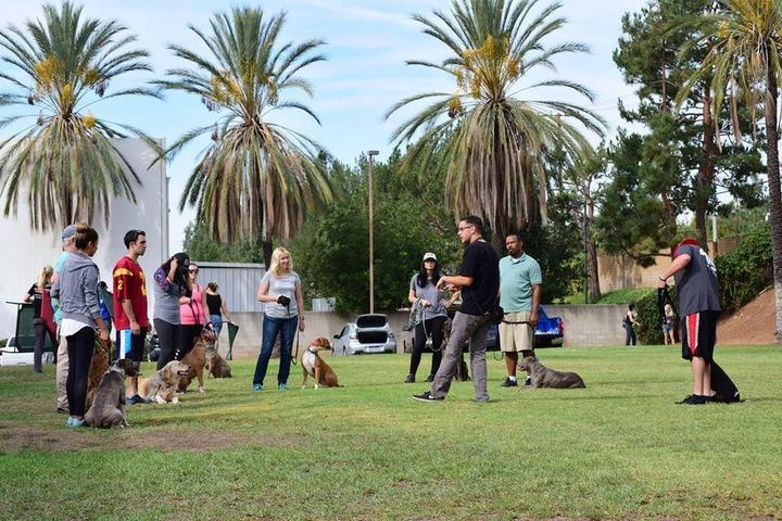 Pet Friendly Falco Dog Training OC