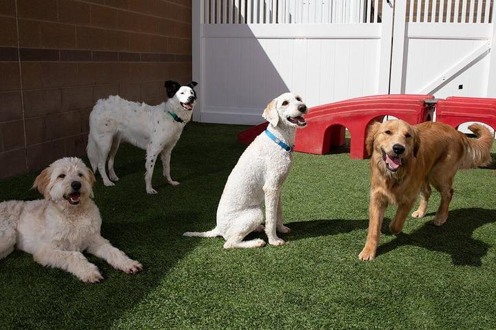 Pet Friendly Camp Bow Wow Fort Collins