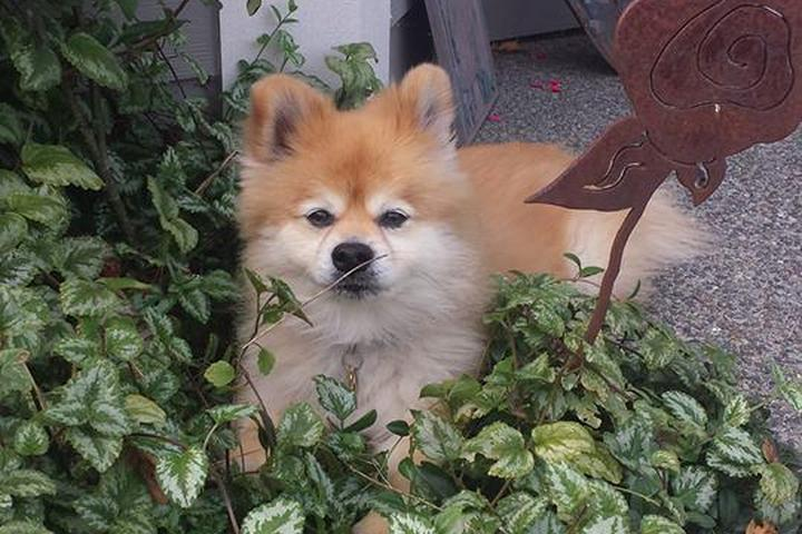 Pet Friendly Fur Face Pet Care, LLC