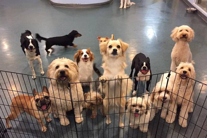 Pet Friendly Wag Club