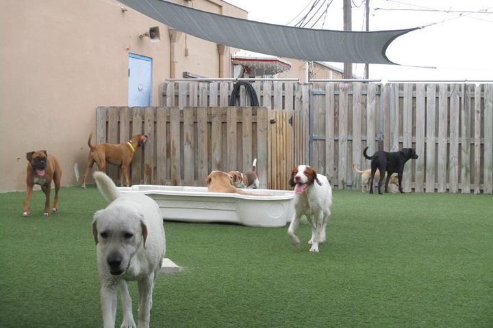 Pet Friendly Camp Canine Boca