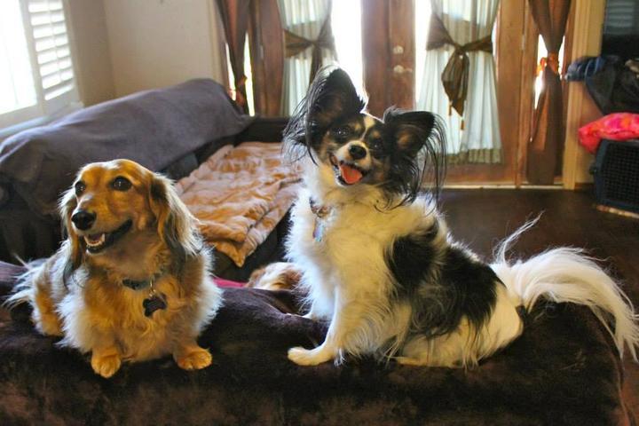 Pet Friendly Pawsitive Petcare California