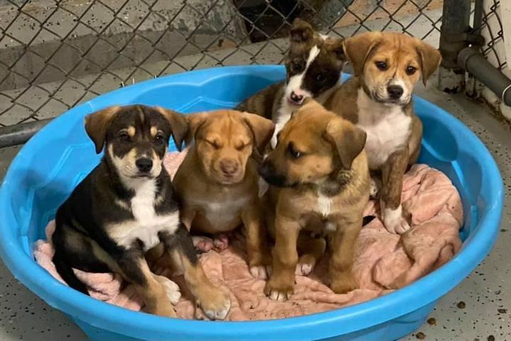 Pet Friendly Duplin County Animal Services