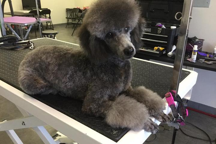 Pet Friendly At Your Service Dog Grooming