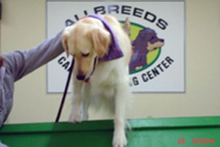 Pet Friendly AllBreeds K9 Training Center