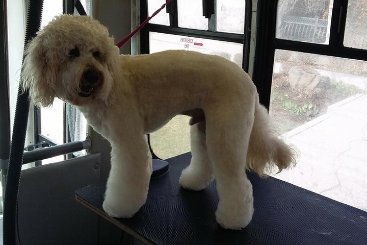 Pet Friendly K-9 Designs Mobile Dog Grooming