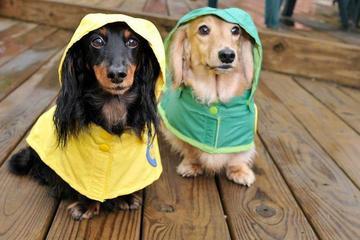 Pet Friendly HCPHES Veterinary Public Health