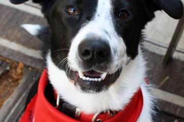 Pet Friendly Red Bandanna Pet Food - Piedmont Rd, Marietta