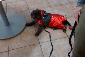 Pet Friendly Red Bandanna Pet Food - Roswell Rd, Marietta