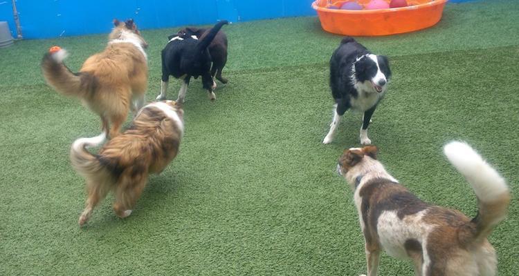 Sherwood Barks Dog Training & Agility