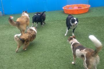 Pet Friendly Sherwood Barks Dog Training & Agility