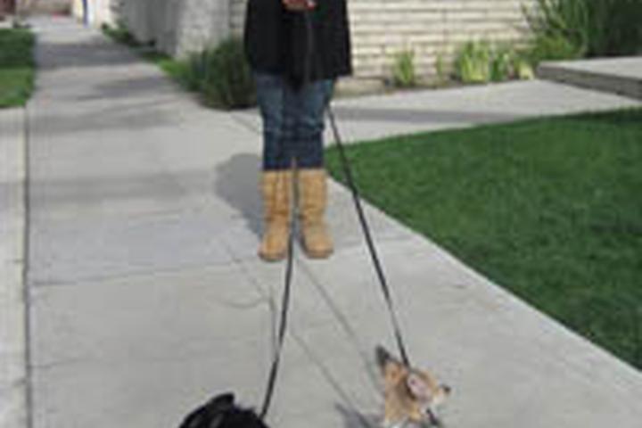 Pet Friendly 3 Dog Training