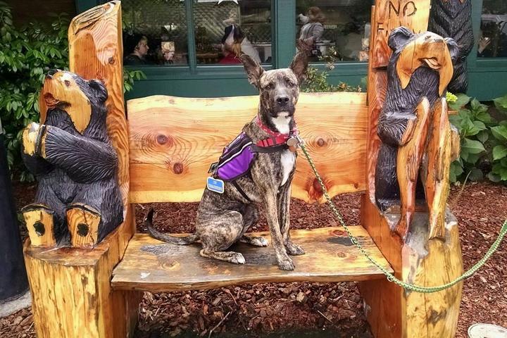 Pet Friendly Diamonds in the Ruff Professional Dog Training