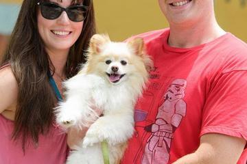 Pet Friendly Rocky's Retreat Canine Health & Fitness Center