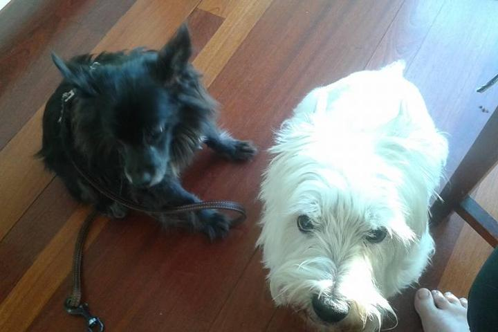 Pet Friendly Debbie's Home & Pet Care
