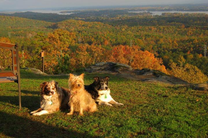 Pet Friendly Dee's Dogwalking & Petsitting, LLC