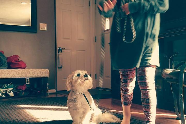 Pet Friendly PRO K-9 In-Home Training Professionals