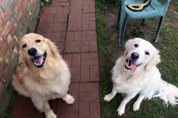 Pet Friendly Fido's Finest Dog Training