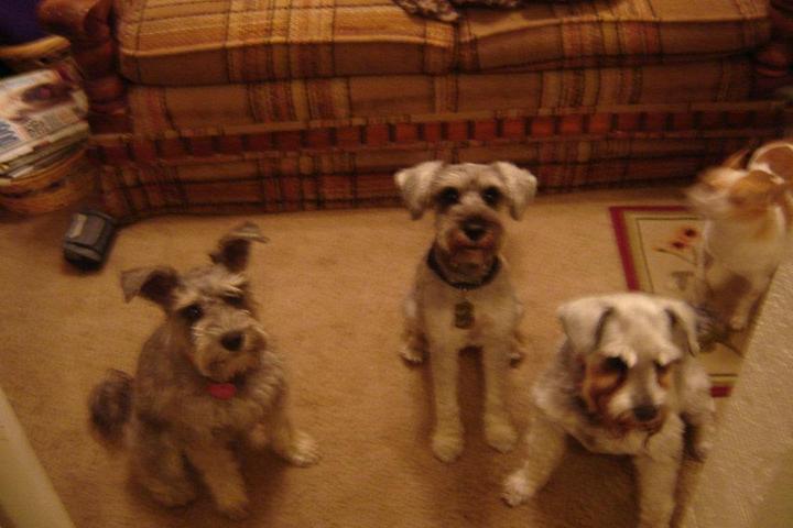 Pet Friendly Barks Bones & Buddies