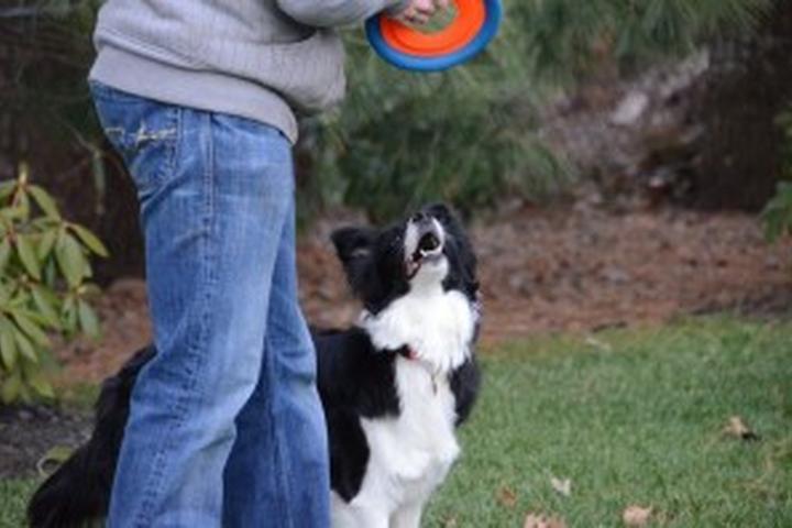 Pet Friendly Jersey Shore Dogs, LLC