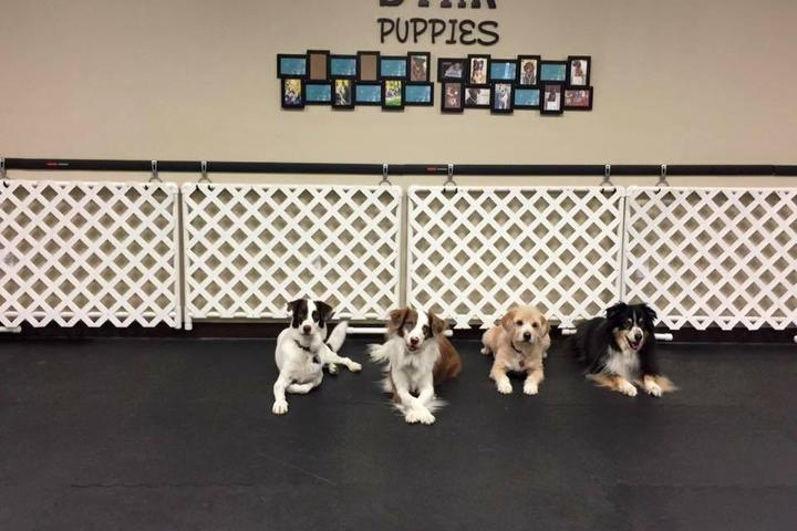Pet Friendly Playful Pups & Performance Training