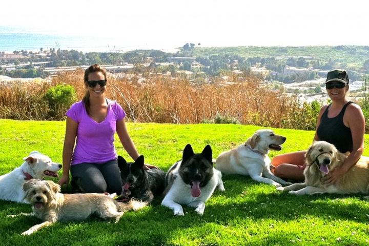 Pet Friendly Coastal K9 Dog Walking & Pet Services