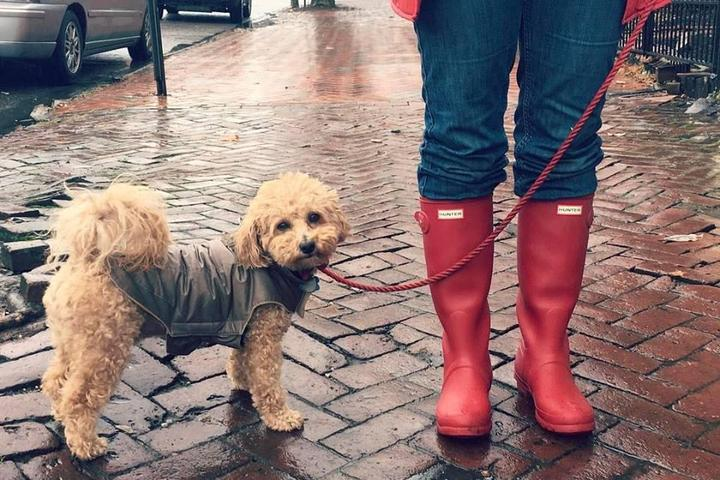 Pet Friendly Le Pooch Dog Walking & Pet Sitting