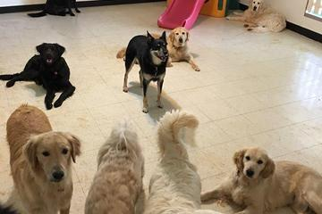 Pet Friendly Dogs Unleashed Daycare
