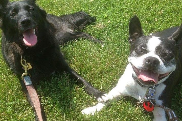 Pet Friendly Milwaukee Pet Services