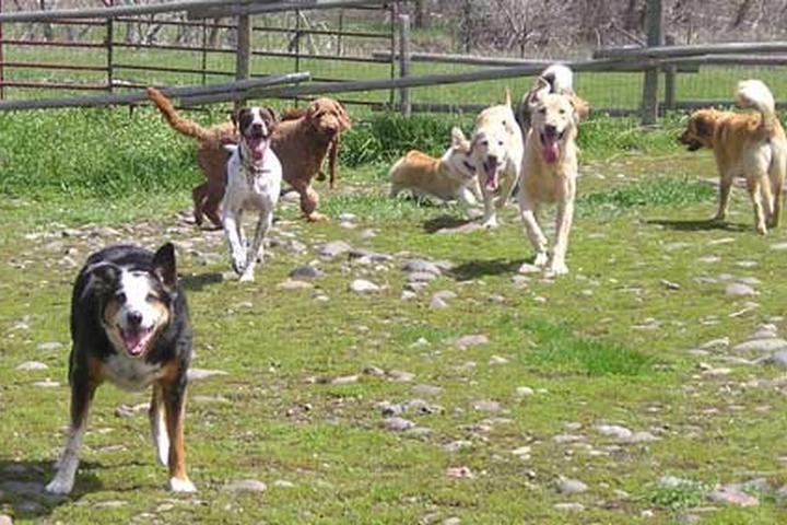 Pet Friendly Animal House Pet Lodging