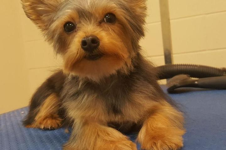 Pet Friendly Cuttle's Dog Grooming & Boutique