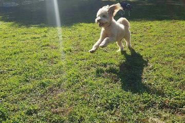 Pet Friendly We Love Dogz! Doggy Day Care