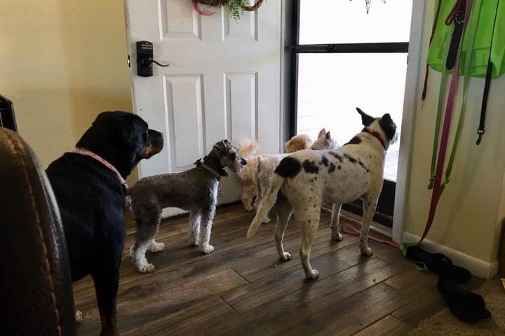Pet Friendly Pawsitive Ruff House Pet Sitting LLC