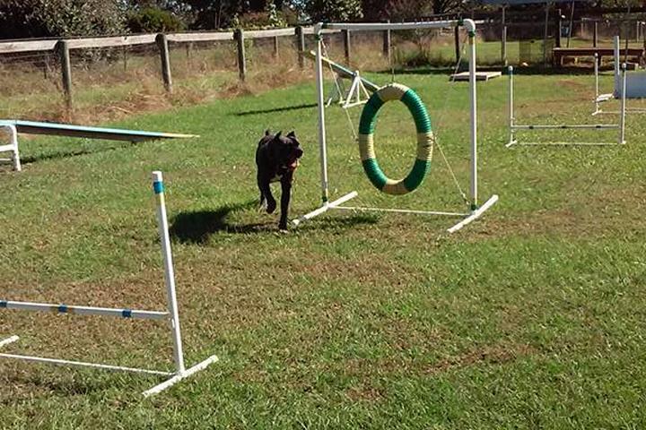 Pet Friendly WorldWideDogSchool
