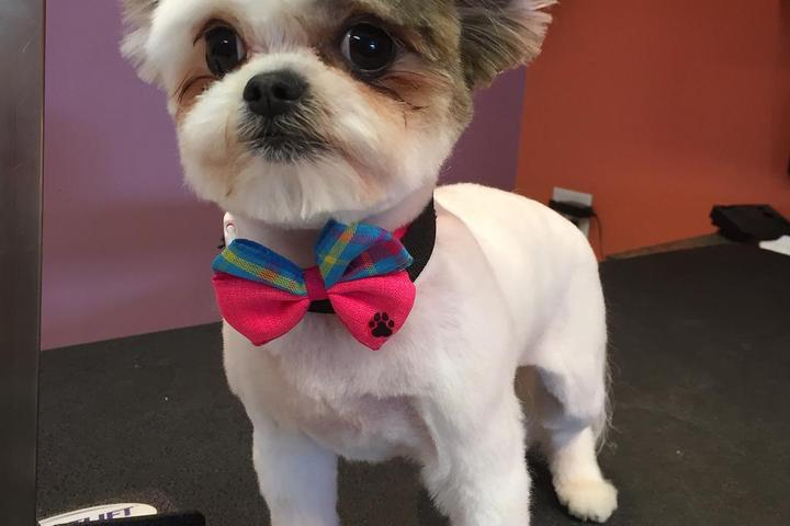 Pet Friendly D'tails Pet Boutique & Spa