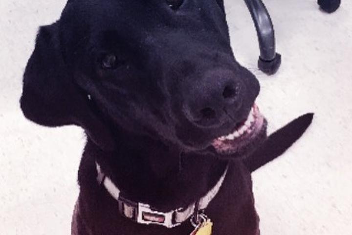 Pet Friendly  Veterinary Urgent Care Center