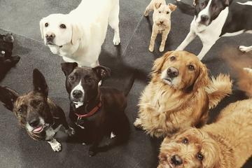 Pet Friendly LexiDog Boutique and Social Club Macadam