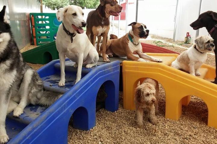 Pet Friendly Halo House Animal Resort