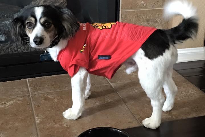 Pet Friendly NOLA Pet Services, LLC