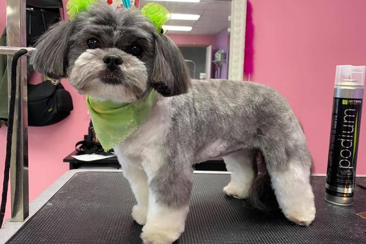 Pet Friendly Groomingdales Salon for Dogs