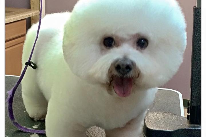 Pet Friendly Kim's Pet Grooming